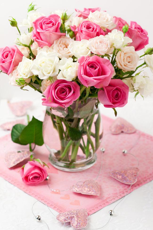 Садко роза